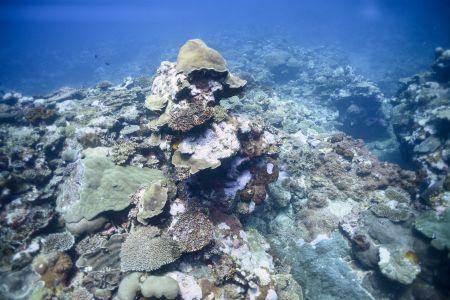 Fiji2.jpg