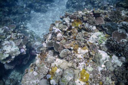 Fiji4.jpg